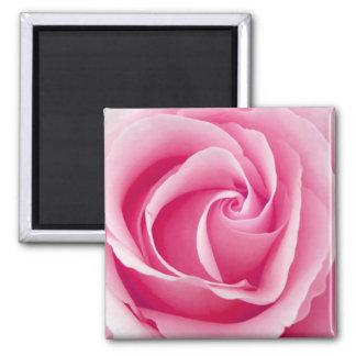 Imã Senhora cor-de-rosa ímã cor-de-rosa - quadrado
