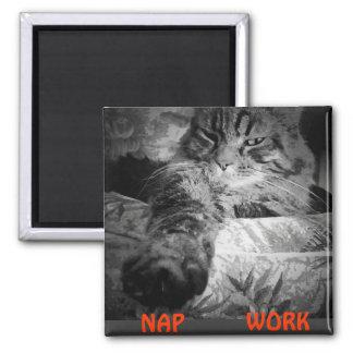 """Imã Sesta ou trabalho? O gatinho diz a """"sesta """""""