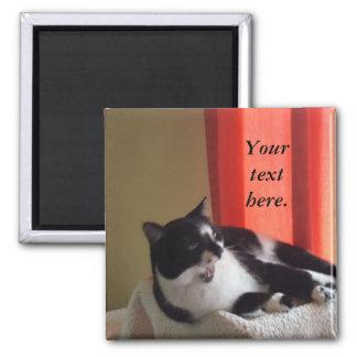 Imã Seu texto exprime ímãs da foto do gato do smoking