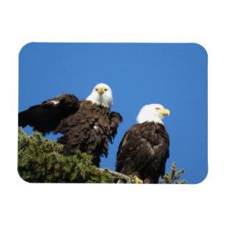 Ímã Sr. e Sra. Eagle