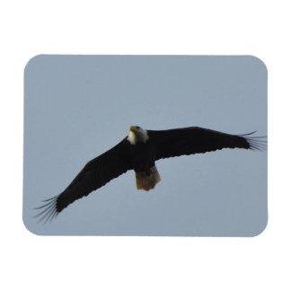 Ímã Subir da águia americana