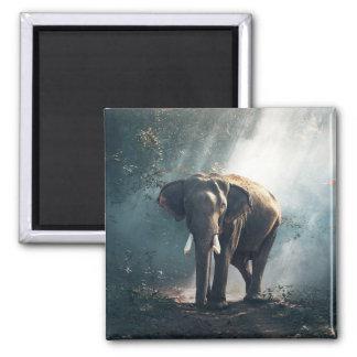 Imã Sun afagou o elefante no ímã da floresta