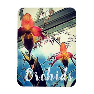 Ímã Sunlit da foto das orquídeas