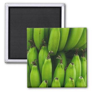 Imã Teste padrão verde da fruta da banana