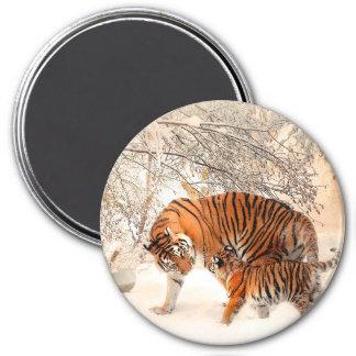 Imã Tigre e filhote - tigre