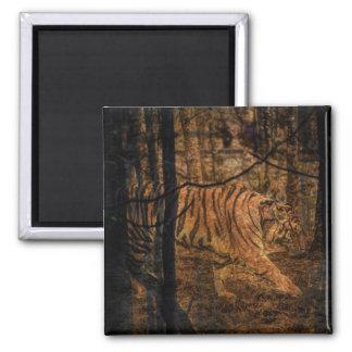 Imã Tigre selvagem majestoso dos animais selvagens da