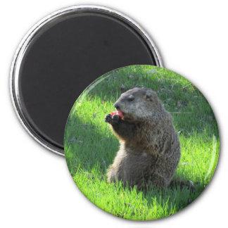 Imã Tomate Groundhog