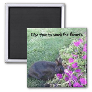 Imã Tome o tempo cheirar as flores