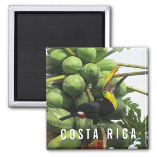 Ímã tropical da lembrança de Costa Rica Toucan Ímã Quadrado