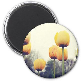Imã tulipas
