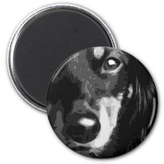 Imã Um Dachshund diminuto preto e branco