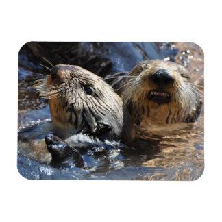 Ímã Um par de lontras de mar
