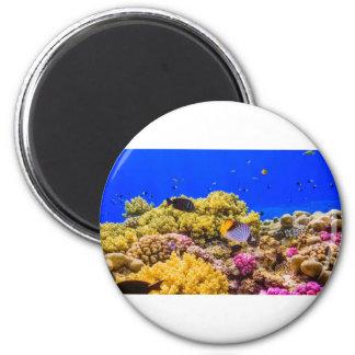 Imã Um recife de corais no Mar Vermelho perto de