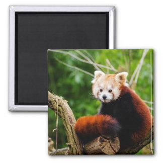 Imã Urso de panda vermelha bonito