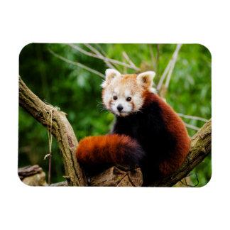 Ímã Urso de panda vermelha bonito