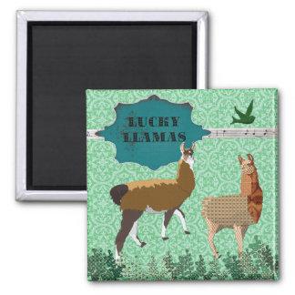 Ímã verde dos lamas afortunados ímã quadrado