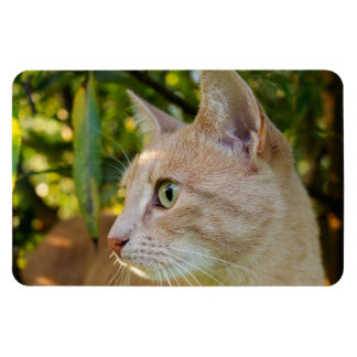 Ímã Verde Tawny gato Eyed do gatinho
