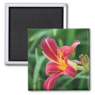 Ímã vermelho da flor do hemerocallis ímã quadrado