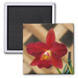 Ímã vermelho da orquídea ímã quadrado