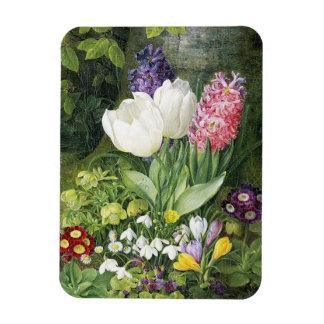 Ímã Vida com tulipas, Сrocus de Christine Løvmand A