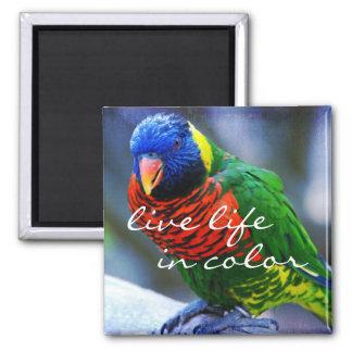 """Imã """"Vida viva foto azul na cor"""" e verde vermelha do"""