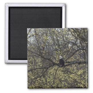 Imã Vigia de Eagle Painterly
