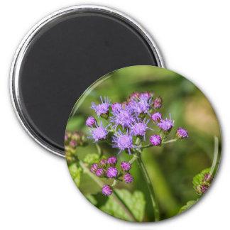 Imã Wildflowers roxos do Ageratum