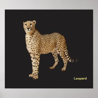 Imagem animal para o poster