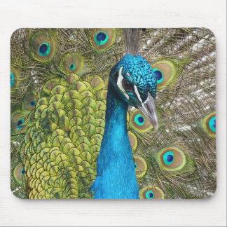 imagem bonita do pavão mouse pad