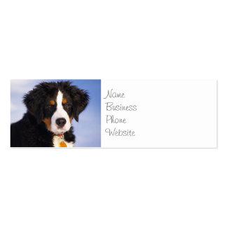 Imagem bonito do filhote de cachorro do cão de cartão de visita skinny