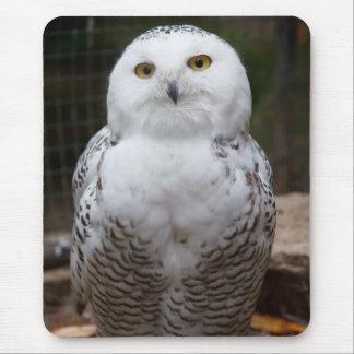 Imagem brilhante dos olhos da coruja branca bonito mouse pad
