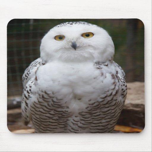 Imagem brilhante dos olhos da coruja branca bonito mouse pads