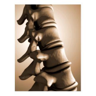 Imagem conceptual da espinha dorsal humana 4 cartao postal