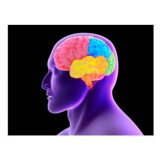 Imagem conceptual do cérebro humano 7 cartao postal