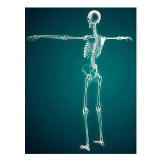 Imagem conceptual do sistema esqueletal humano cartoes postais