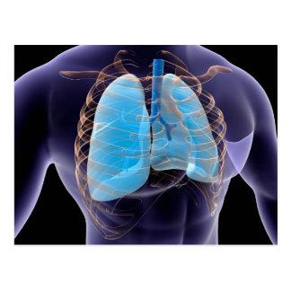 Imagem conceptual dos pulmões e da caixa torácica cartões postais