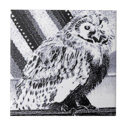 Imagem da coruja azulejos de cerâmica