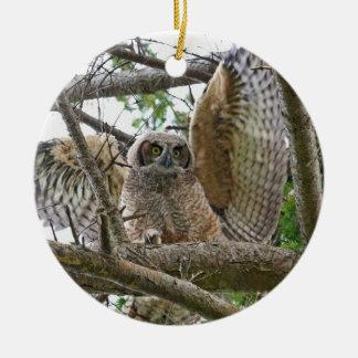 Imagem da coruja do bebê ornamentos