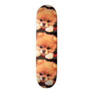 imagem de cãozinho skates