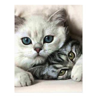 imagem de dois gatos flyer 21.59 x 27.94cm