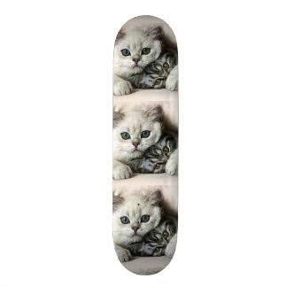 imagem de dois gatos skates