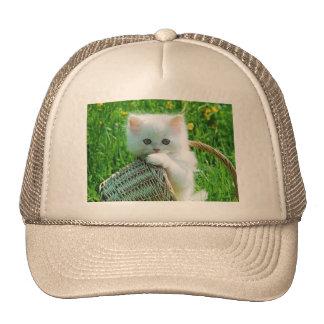 imagem de gatinho bone