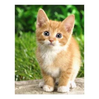 imagem de gatinho modelo de panfleto