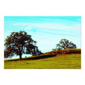 Imagem do cenário da árvore impressão de foto
