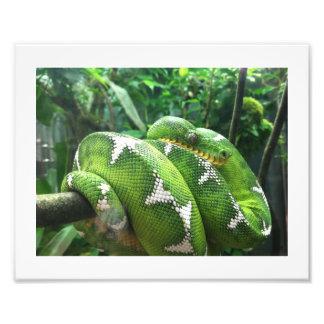 Imagem do cobra impressão fotográfica