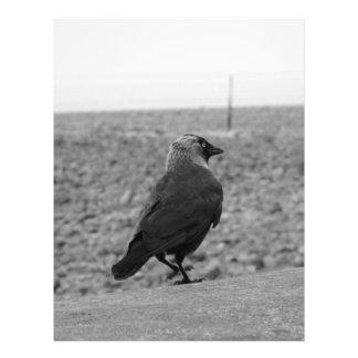 Imagem do pássaro Jackdaw Panfletos