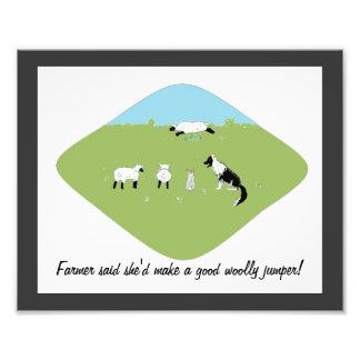 Imagem engraçada dos carneiros impressão de foto