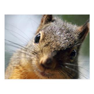 Imagem extrema do esquilo do close up cartão postal