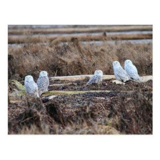 Imagem nevado de cinco corujas cartao postal