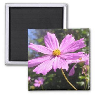 "Íman ""flor"" pink ímã quadrado"